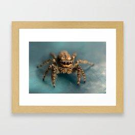 Small jumping spider Framed Art Print