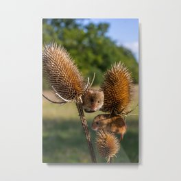 Harvest Time. Metal Print
