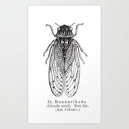 Black and White Cicada Art Print