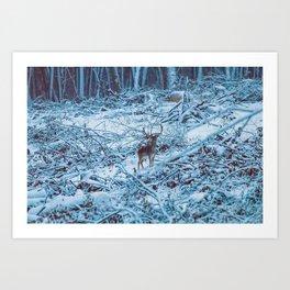 Fallow deer buck snow forest landscape (Dama Dama) Art Print