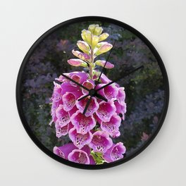 Gloves in summer!  Foxglove, Digitalis purpurea Wall Clock