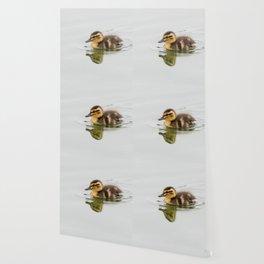 Duckling swimming Wallpaper