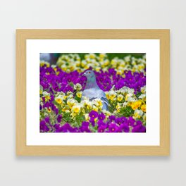 Pigeon and Pansies Framed Art Print