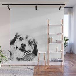 Funny peekaboo dog Wall Mural