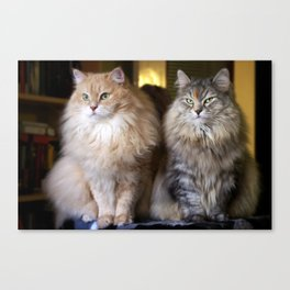 Mr. Cesare and Queen Cleopatra. Siberian cats Canvas Print
