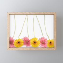 Colorful Pink and Yellow Gerbera Daisy Flowers Fine Art Photography Framed Mini Art Print