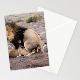 Lions mating in African savannah Stationery Cards