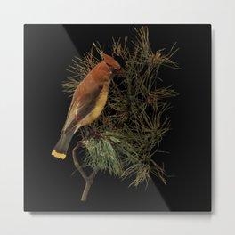 Cedar Waxwing Bird Illustration Metal Print