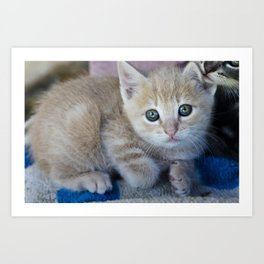 Red Kitten Art Print