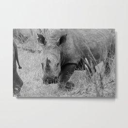 White Rhino Metal Print