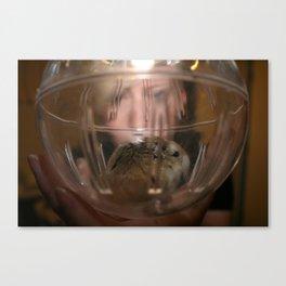 Hamster Ball Canvas Print