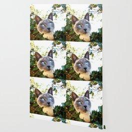 Siamese Cat in Tree Wallpaper