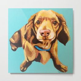 Miniature Long Haired Dachshund Painting on Blue Turquoise  Metal Print