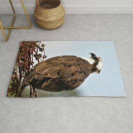 Magnificent Osprey Raptor by Reay of Light Rug