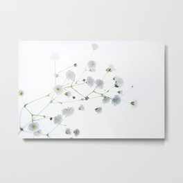 Soft and Delicate Babys Breath Metal Print