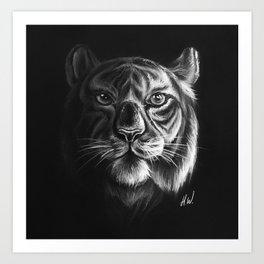 """White Tiger"" Drawing Art Print"