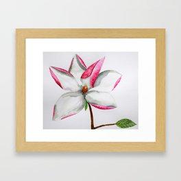 Watercolour Magnolia Framed Art Print