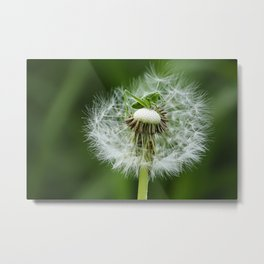 grasshopper on dandelion seeds Metal Print