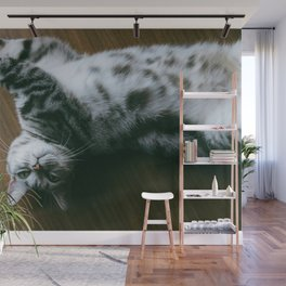 Cat by Joey Huang Wall Mural