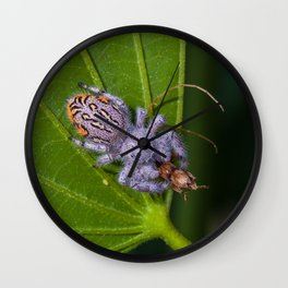 White spider eating prey Wall Clock