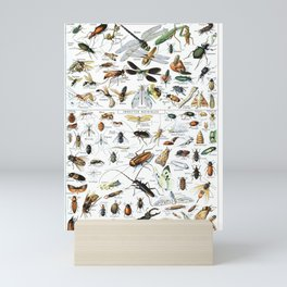 Insects Illustrations by Millot and Larousse Mini Art Print