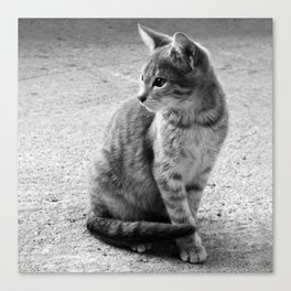 Lloyd- Black and White Cat Photography Canvas Print