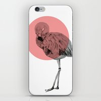 flamingo iPhone & iPod Skins featuring flamingo by morgan kendall