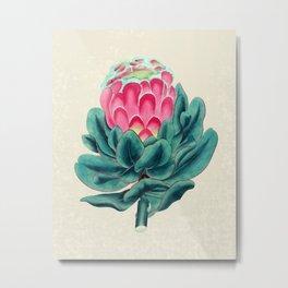 Protea flower garden Metal Print