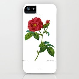 Rose, Rosa Gallica, Rosier de France, Red Rose, Apothecary's Rose, The Red Rose of Lancaster, Rose de province, Plate 8, by Pierre Joseph Redoute iPhone Case