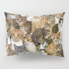 A Gathering of Cats Pillow Sham