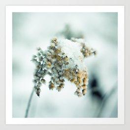 Frost & beauty Art Print