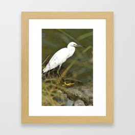 Yellow-Footed Snowy Egret Framed Art Print