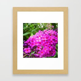Cosmic Blossom Framed Art Print