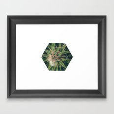 Sacred Geometry Cannabis .02 Framed Art Print