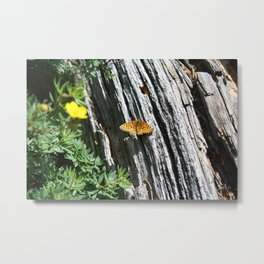 Orange Butterfly on a Log Metal Print