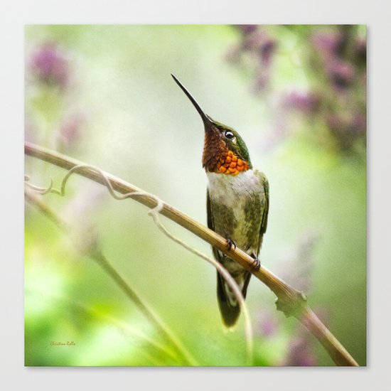 Hummingbird Passion Canvas Print
