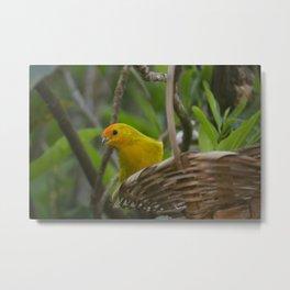 Bird Metal Print
