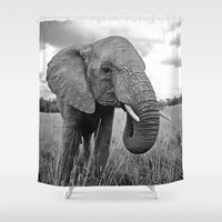 south africa Shower Curtains featuring African Elephant, South Africa by Shannon Wild