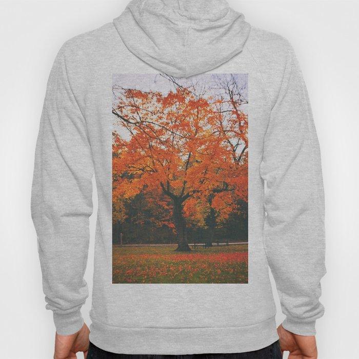 Bright Orange Fall Tree Hoody