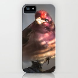 March Purple Finch iPhone Case