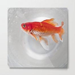 Swiming dead Metal Print