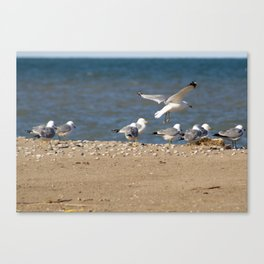 Landing | Seagull Photography Canvas Print