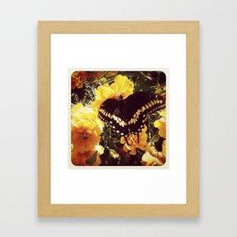 Butterfly with orange flowers Framed Art Print