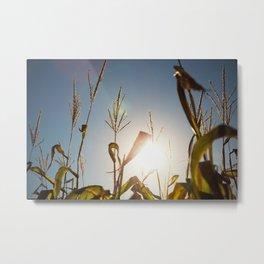 Corn Field 10 Metal Print