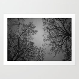 The Birds Are Spies, They Report to the Trees Art Print