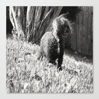 poodle Canvas Prints featuring Poodle by Quotably Yours