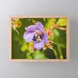 Pollen Feet Bumble Bee. Photograph Framed Mini Art Print