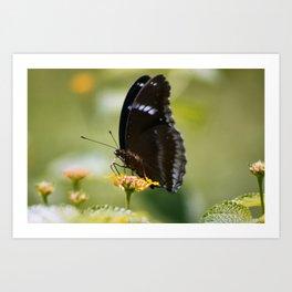 Butterfly (1) Art Print