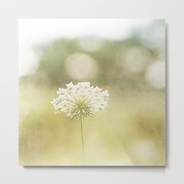 Queen Anne's Lace Nature Photography, Pale Yellow Floral Photography Metal Print