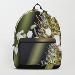Buckhorn flower top close up Backpack
